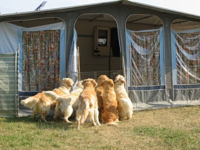 Dogs on holiday with us